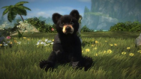 BlackBearAdoptionSitting-620x