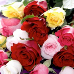 Valentines Day Rose Symbolism | How Many and What Color Do I Send?