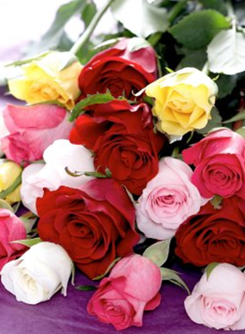 Valentines Day Rose Symbolism How Many And What Color Do I Send