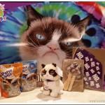 Happy Birthday Grumpy Cat | #WIN a Trip to NYC | #GrumpyBirthday