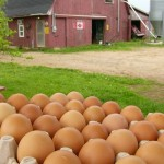 Locally Grown Foods You Should Be Buying