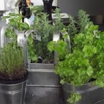 How to Create a Potted Mediterranean Herb Garden