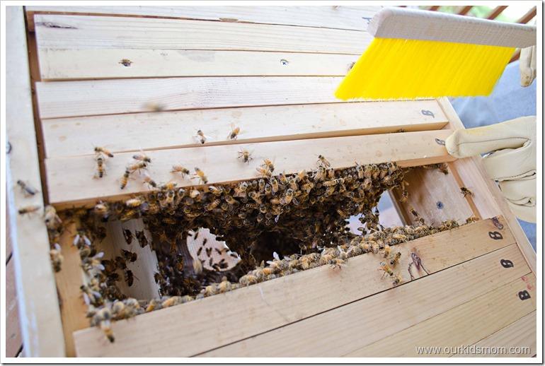 beehive6