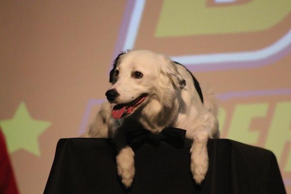 stunt dog