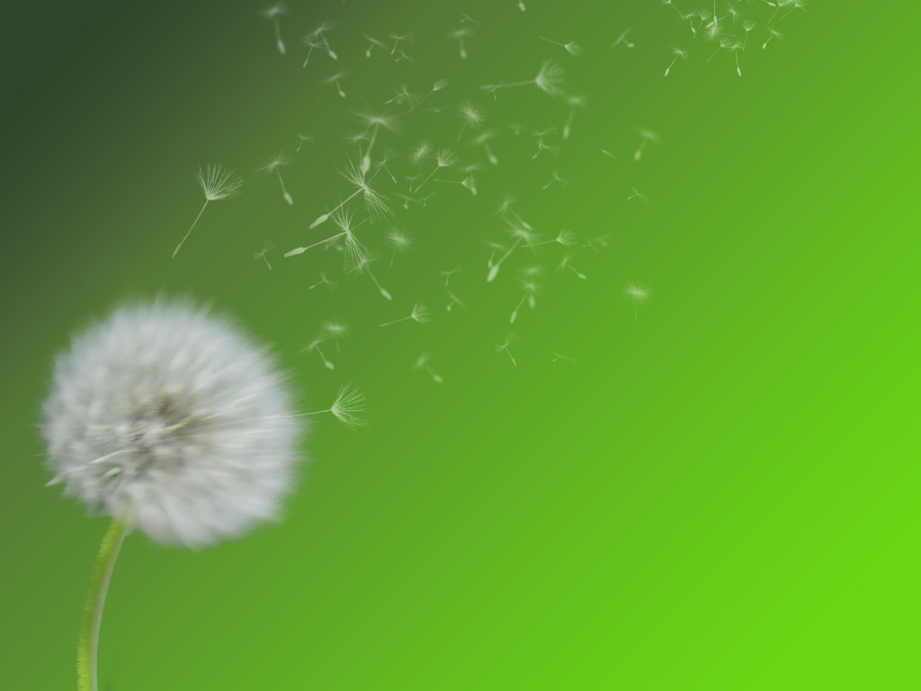 background_dandeliion