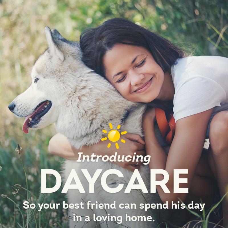 dv_daycare_ig