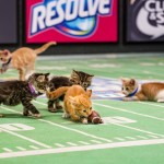 The Kitten Bowl III is Back | Football + Kittens = ADORABLE!