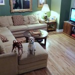 How to Maintain Your Newly Installed Hardwood Floors