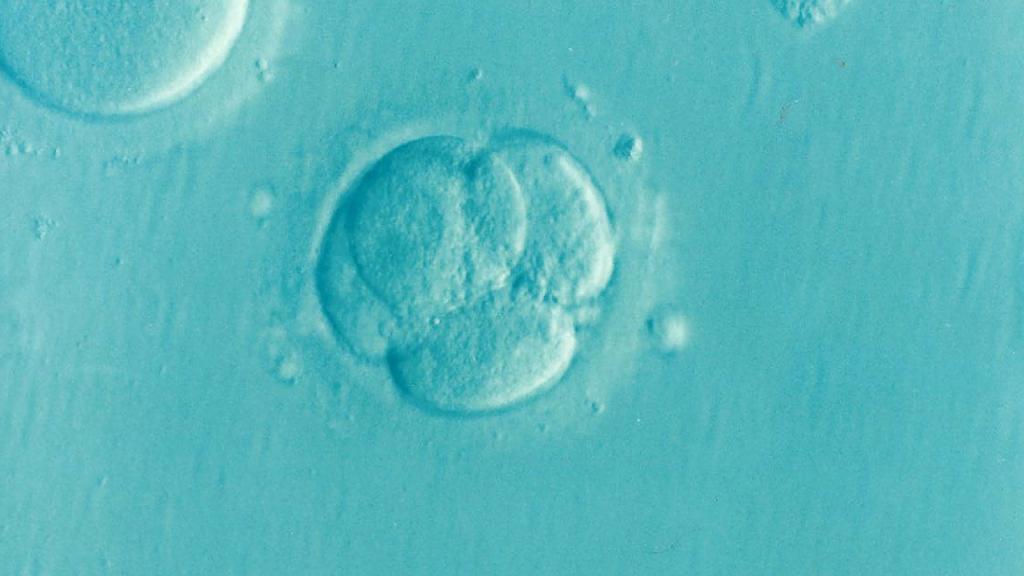 embryo-1514192_1280