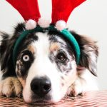 Pawsome Holiday Gift Ideas for Your Dog